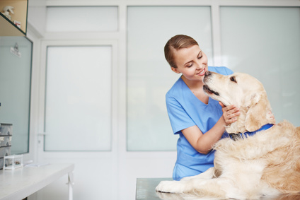 female veterinarian in blue uniform hugging and talking to white fluffy labrador lying on table during check-up
